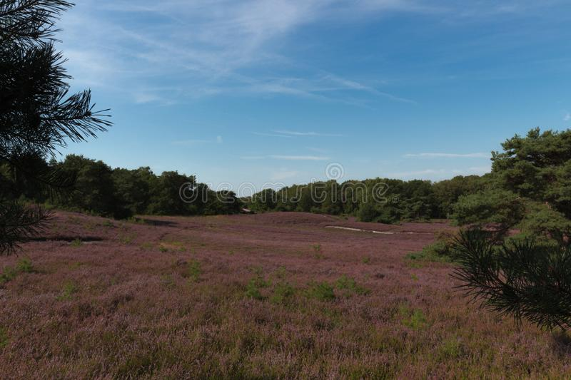 The Brunsummerheide a national park in the Limburg the Netherlands. Ideal place for an active lifestyle stock image