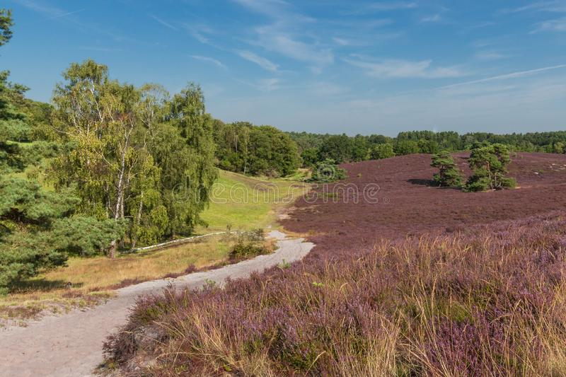 The Brunsummerheide a national park in the Limburg the Netherlands. Ideal place for an active lifestyle royalty free stock photography