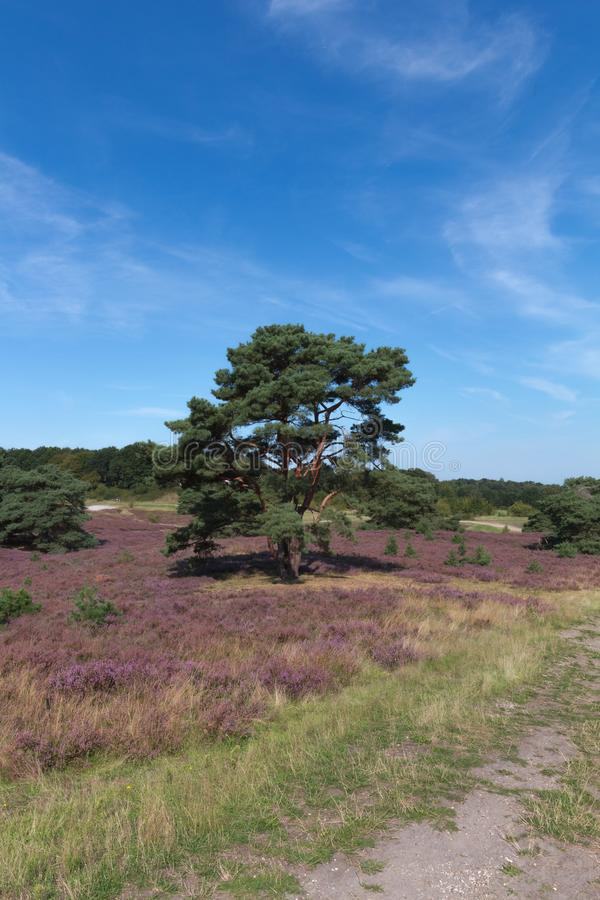 The Brunsummerheide a national park in the Limburg the Netherlands. Ideal place for an active lifestyle royalty free stock images
