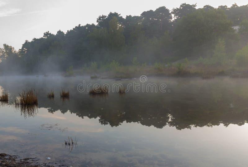 Brunsummerheide a national park in South Limburg ith morning fog over the swamp during sunrise royalty free stock image