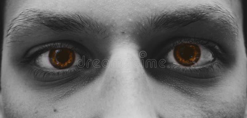 Bruntögon arkivfoto