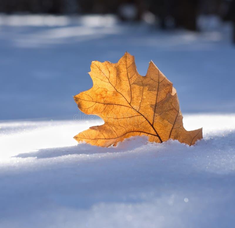 Brunt blad en tidig snö arkivfoton