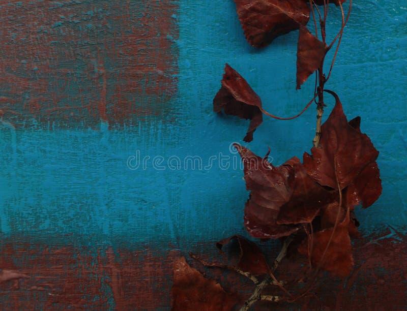 Brunt blad på blått royaltyfri fotografi