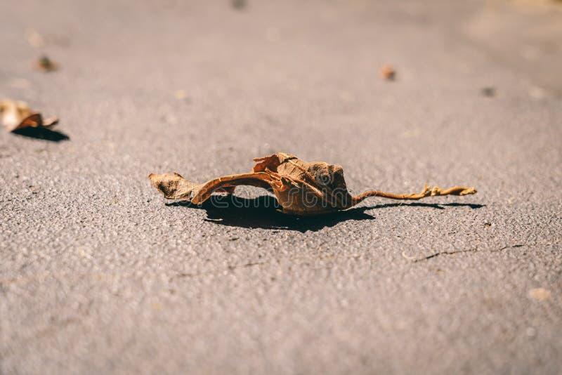 Brunt enkelt blad på konkret golv fotografering för bildbyråer