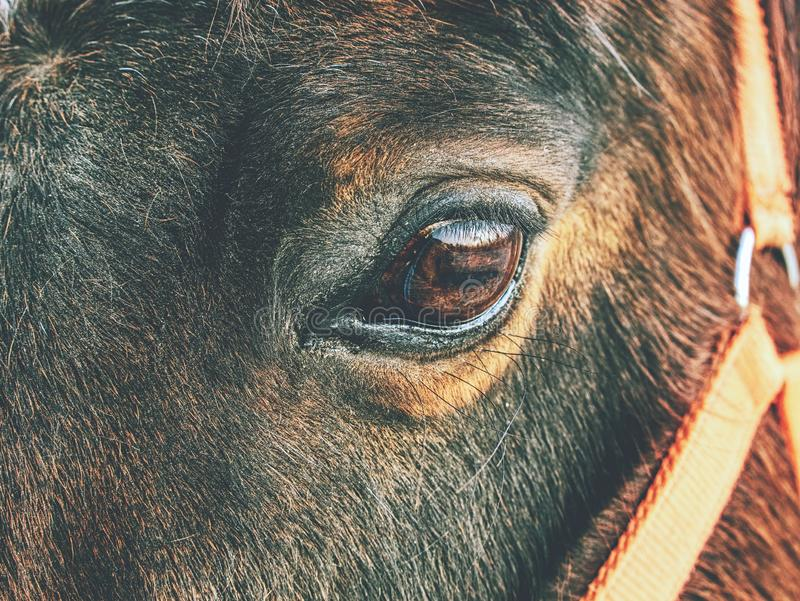 Brunt hästhuvud Hästen går i lantgård royaltyfri foto