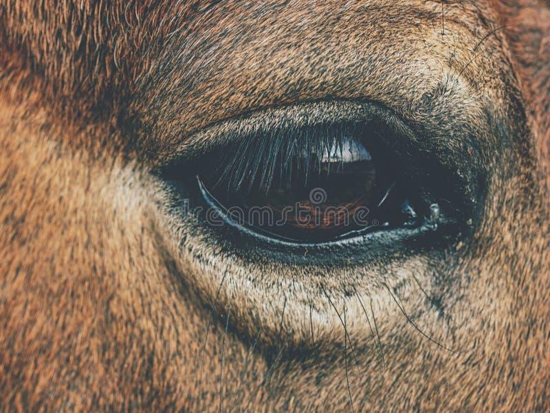 Brunt hästhuvud Hästen går i lantgård royaltyfri bild