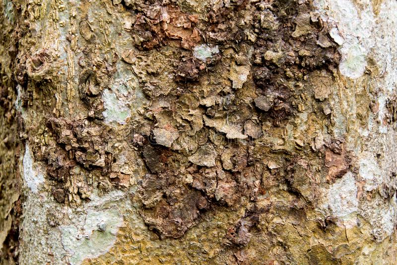 Brunt sk?ll av en tree arkivfoton
