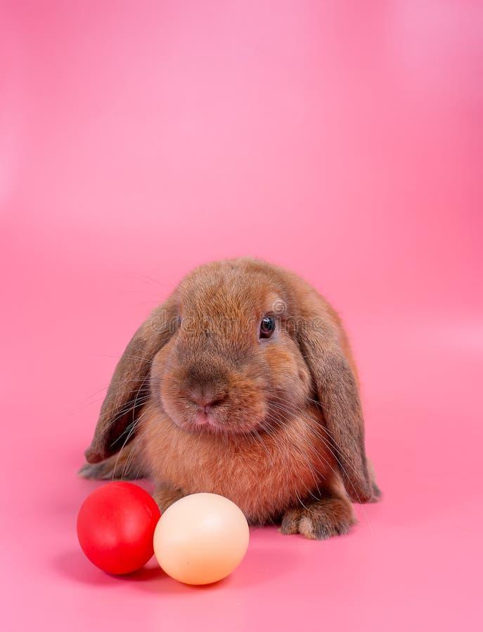 Brunt stag för kaninkanin bak easter ägg med rosa bakgrunds- och kopieringsutrymme royaltyfria foton