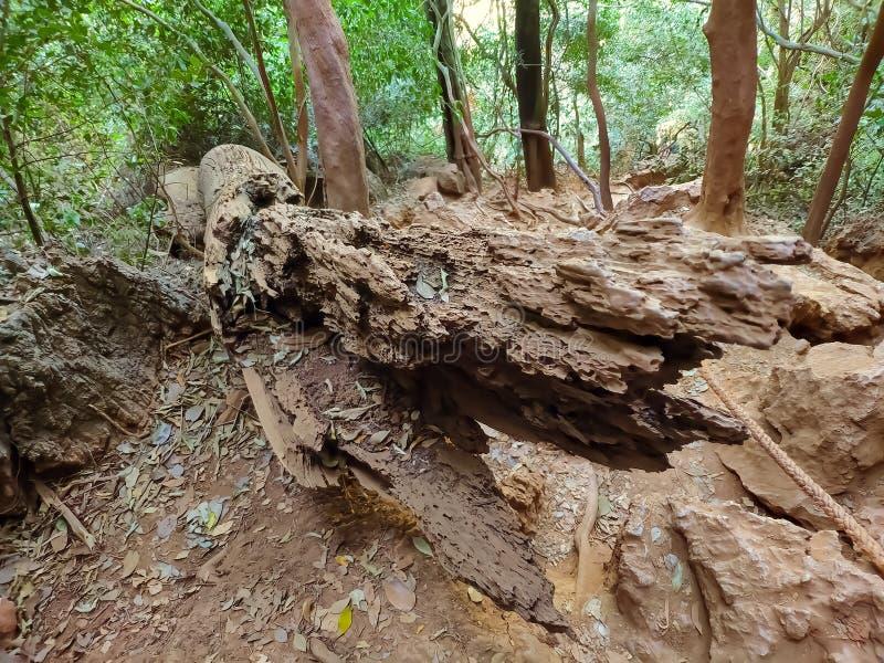 Brunt torrt gammalt träd i gröna djungler royaltyfri bild
