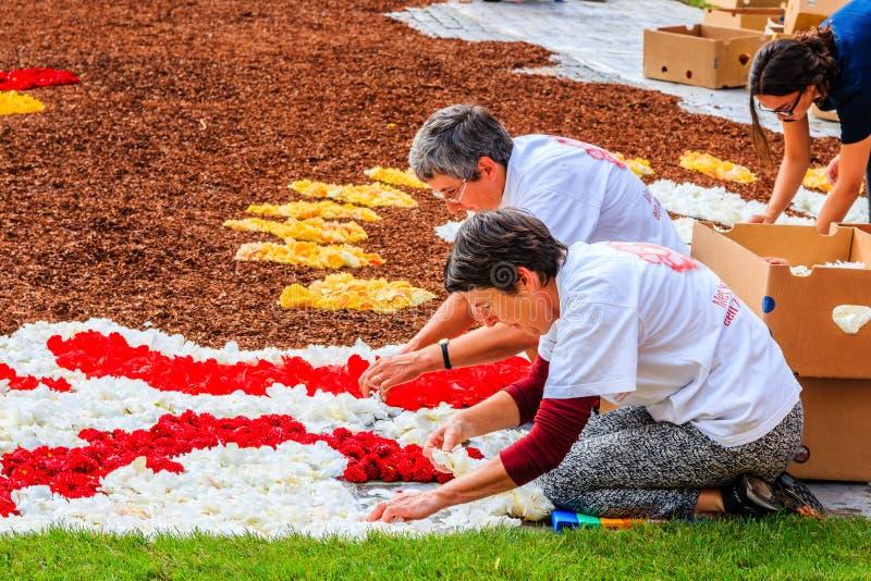 Bruselas, Bélgica Las mujeres crean la alfombra de la flor en el cuadrado de Grand Place fotos de archivo