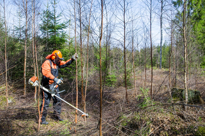 Download Brush cutter work stock photo. Image of thicket, agriculture - 30680526