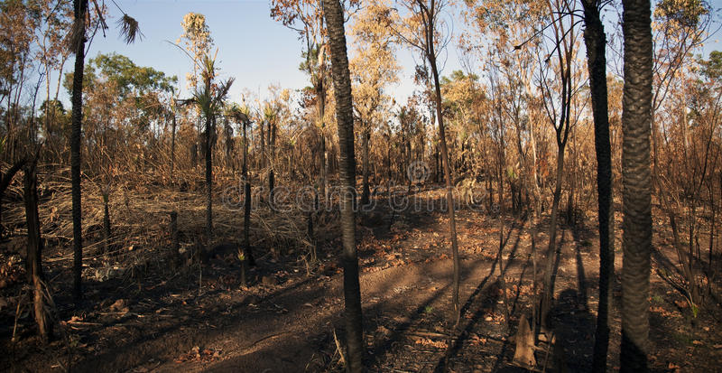 brush det brända nordliga territoriet för buskebrand fotografering för bildbyråer