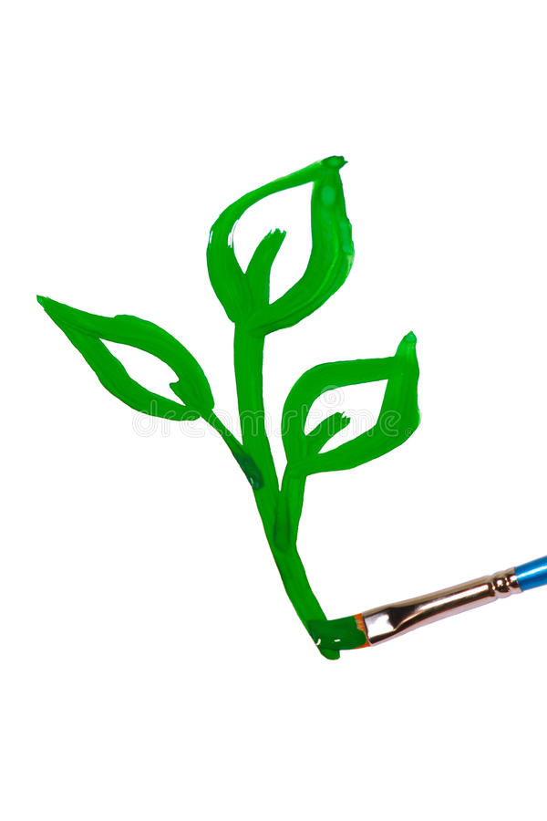 Brush draws a green sprout stock photo