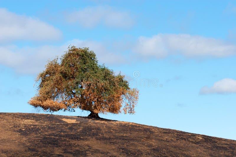 brush fire hor tree στοκ εικόνες