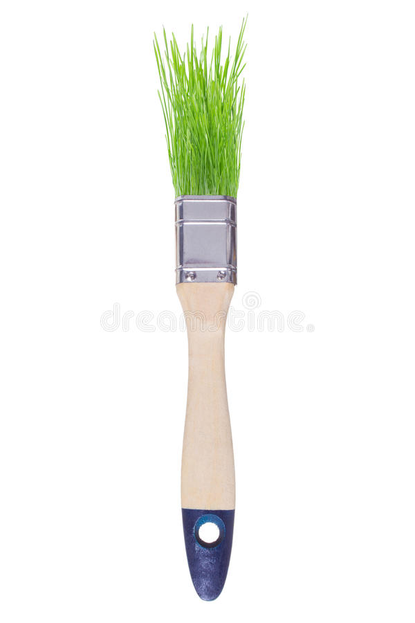 Download Brush with green grass stock illustration. Image of alternative - 33662629