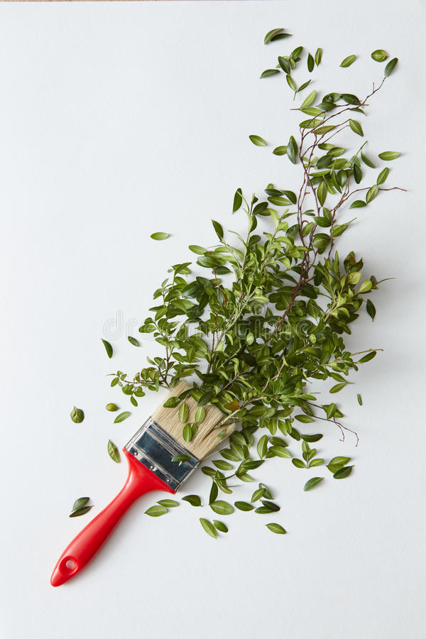 Brush with green leaves stock image