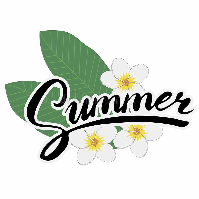 Brush lettering composition of Summer with Plumeria flowers in white background. royalty free stock image