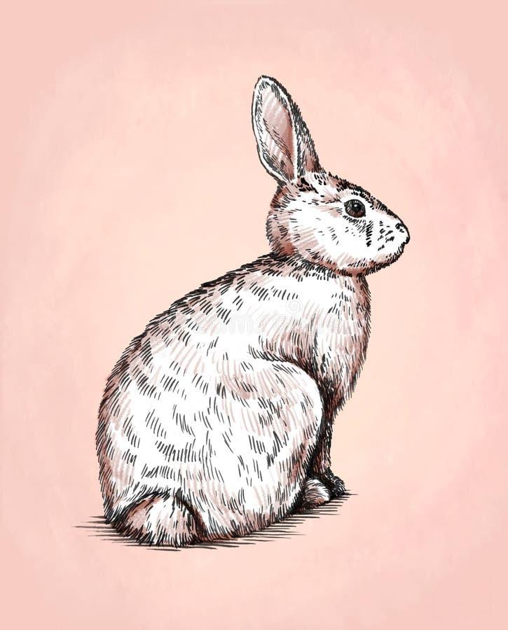 Brush painting ink draw rabbit illustration. Color brush painting ink draw rabbit illustration vector illustration