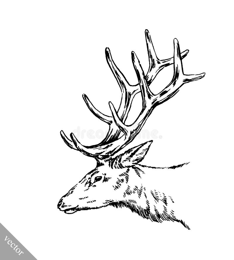 Brush Painting Ink Draw Vector Deer Illustration Stock