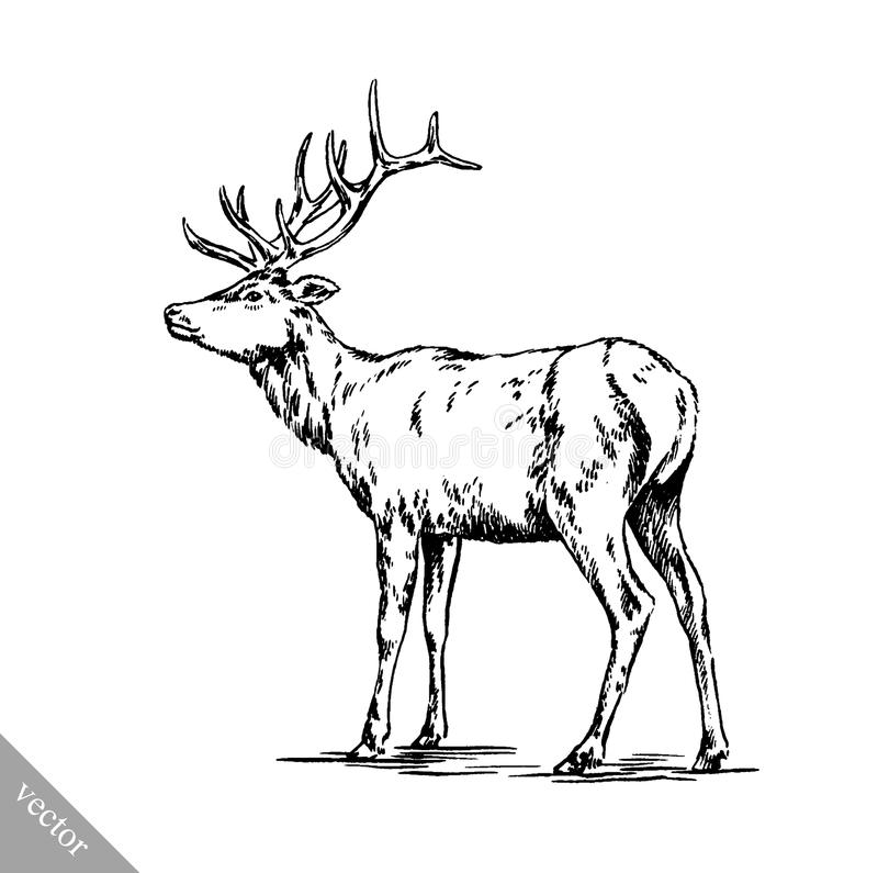 Deer Contour Line Drawing : Brush painting ink draw vector deer illustration stock