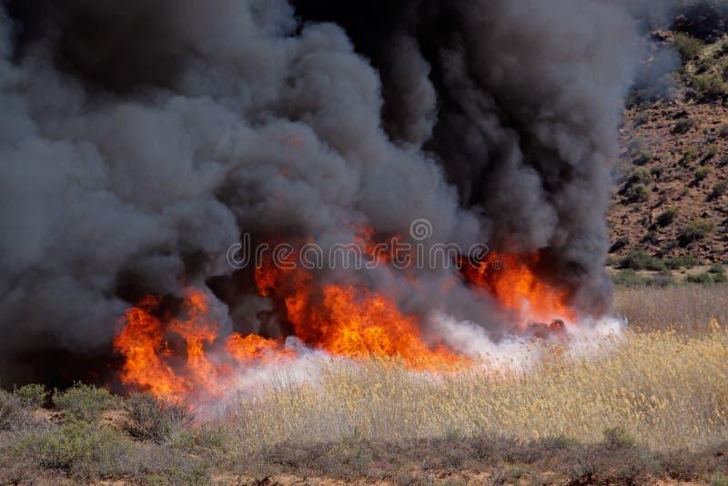 brushfire стоковое фото