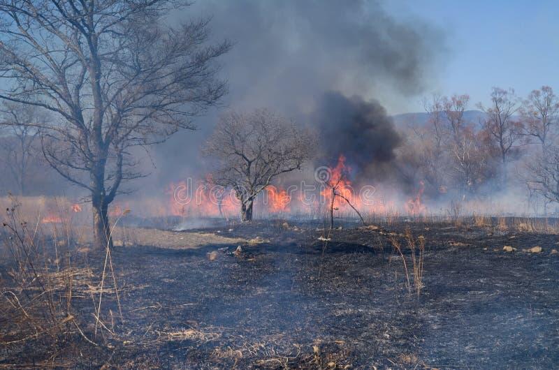 brushfire 3 стоковое фото rf