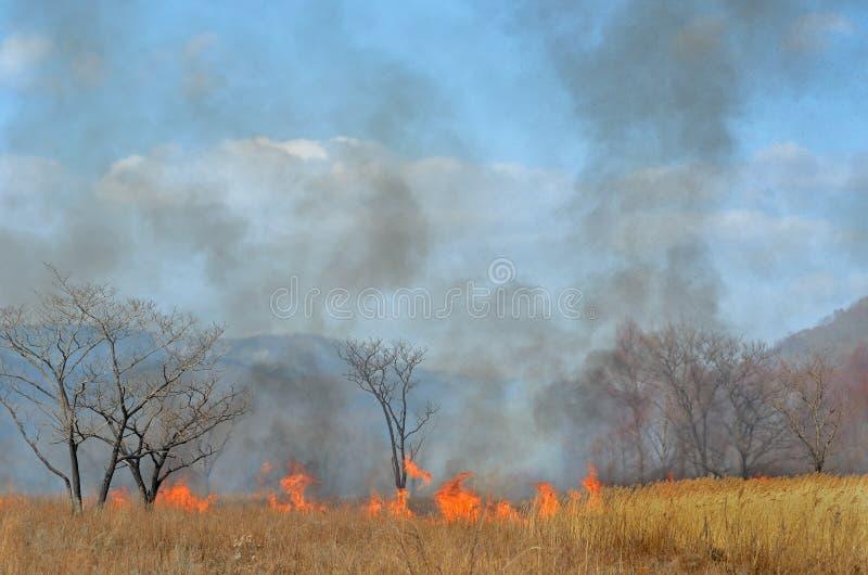 Brushfire 18 стоковая фотография