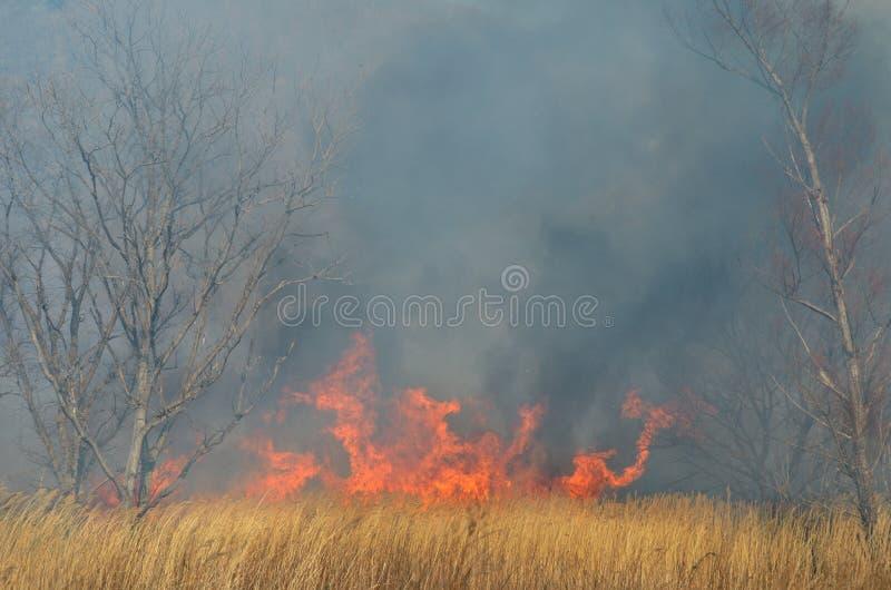 Brushfire 18 стоковые фотографии rf