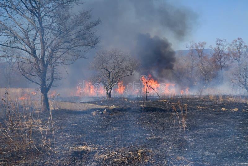 brushfire 4 стоковое изображение