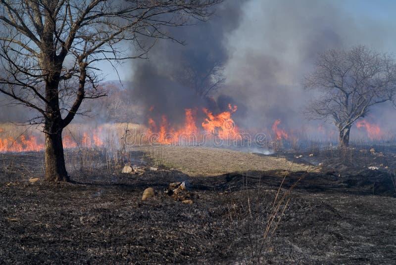 brushfire 6 стоковое изображение