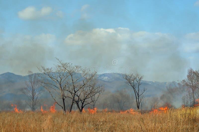 Brushfire 20 стоковые фото