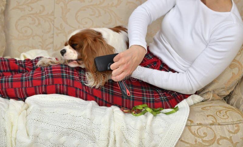 Brushing Lovely Dog stock photos