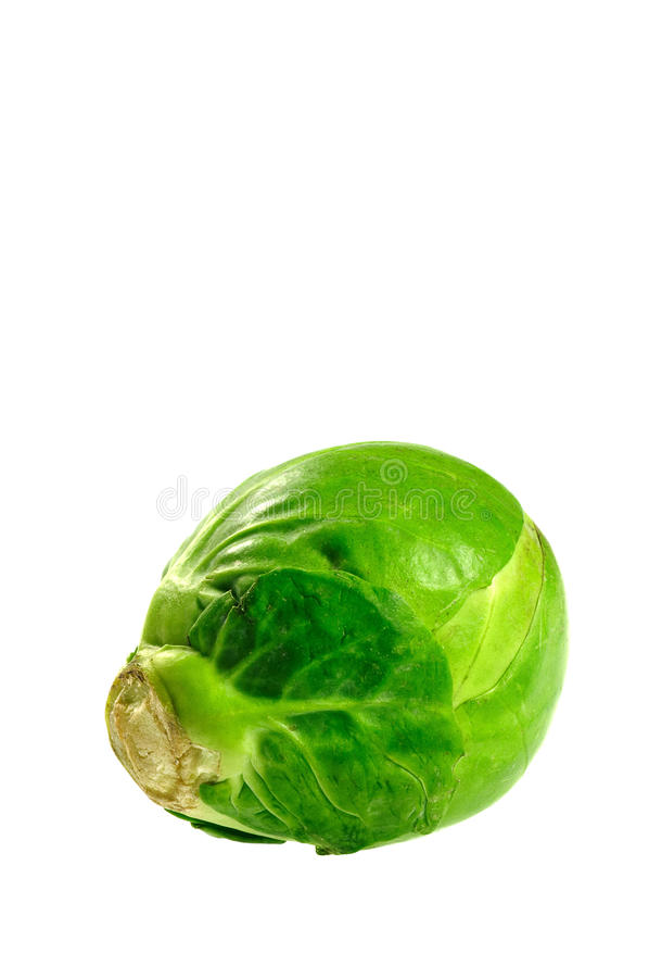 Brussel sprout. One brussel sprout isolated on white background stock image