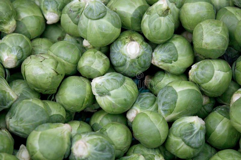 Brussel sprout stock photography