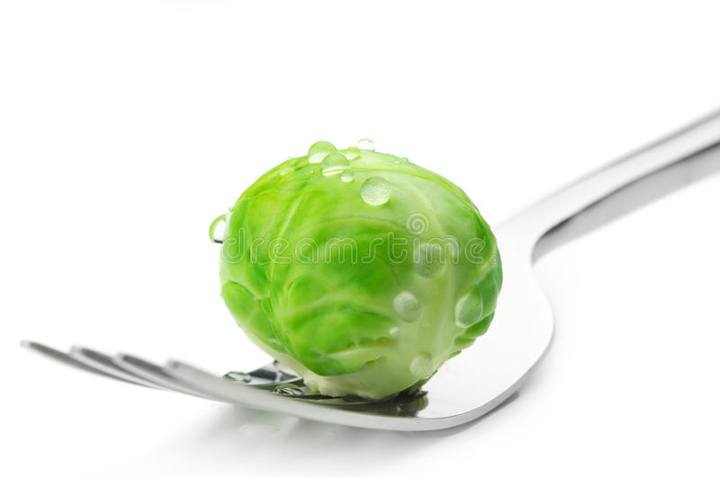 Brussel sprout on fork. Fresh wet brussel sprout on fork against white background royalty free stock image
