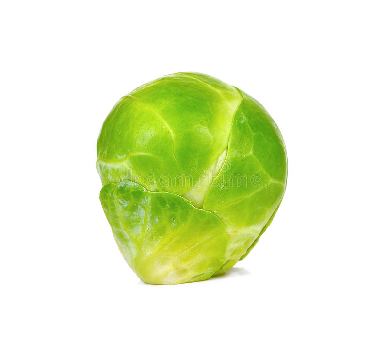 Brussel sprout isolated on the white background.  royalty free stock image