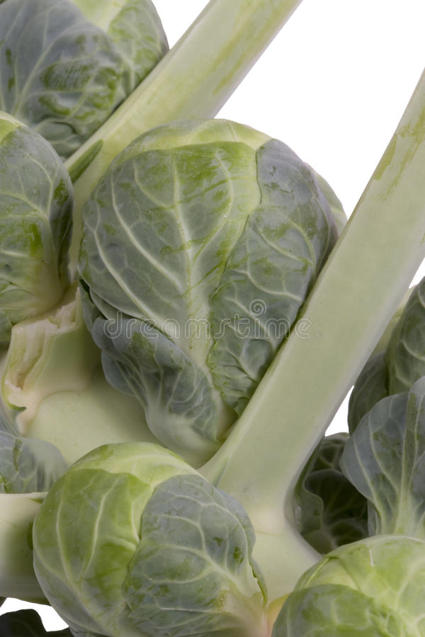 Download Brussel Sprout On Stalk - Close Up Royalty Free Stock Image - Image: 11700596