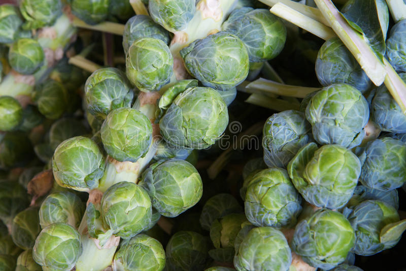 Brussel sprout stalks. Macro of several green brussle sprout stalks at the farmers market stock image