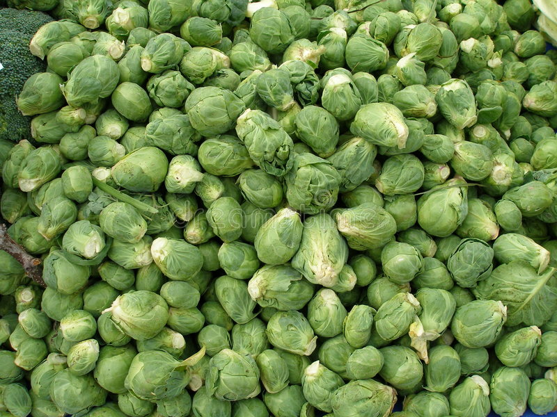 Brussel sprouts. Fresh whole green brussel sprouts stock image
