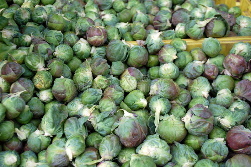 Brussel Sprouts. For sale in the market royalty free stock image