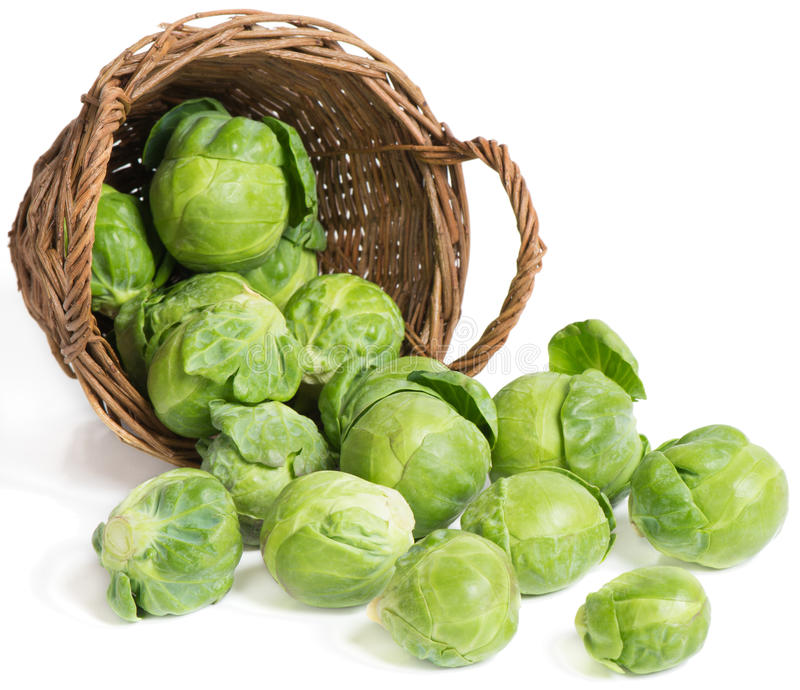 Brussel sprouts ( brassica oleracea L.). Underlying basket with brussel sprouts spilling on a white stock photography