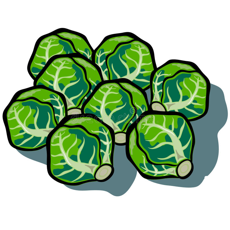 Brussel Sprouts stock illustration