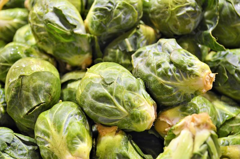 Brussel sprouts. Green Brussel sprouts at farmers market stock images