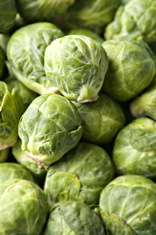 Brussel Sprouts in Pile. In two sprouts in sharp focus royalty free stock photography