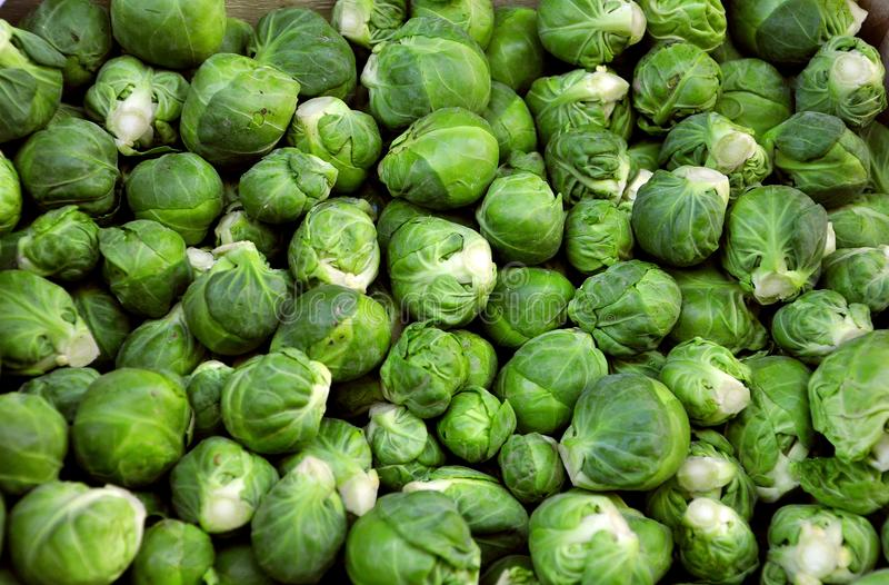 Brussel sprouts on sale in a market. The Brussels sprout is a cultivar of wild cabbage grown for its edible buds. The leafy green vegetables are typically 2.5 royalty free stock photography