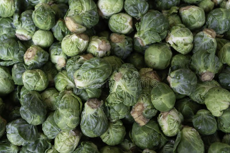 Green brussel sprouts stock photography