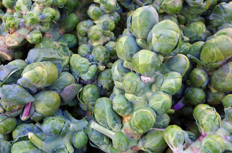 Brussel sprouts on stalks royalty free stock photos