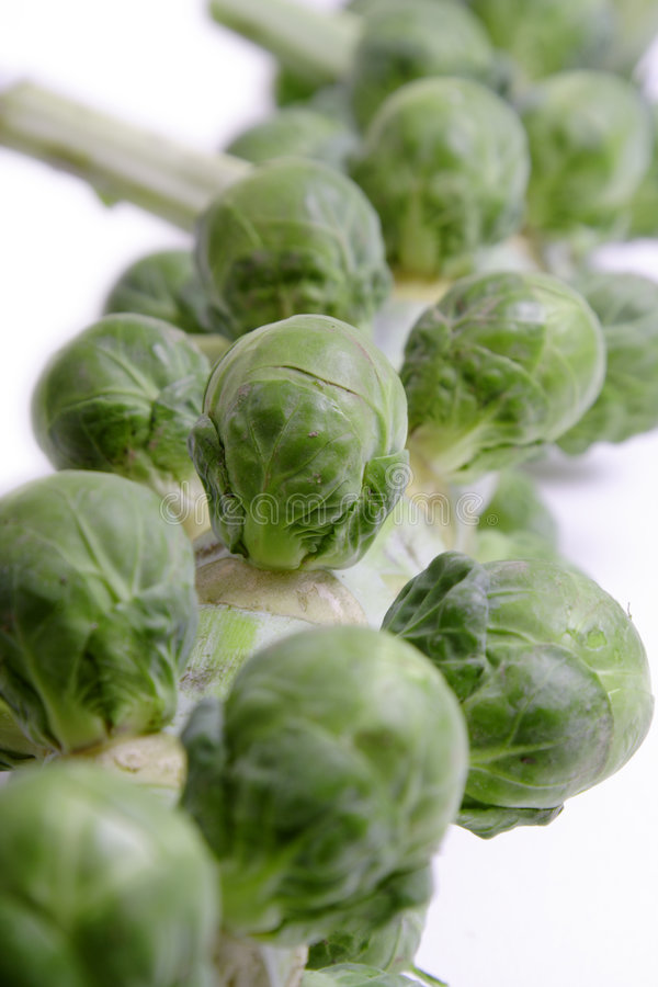 Brussel Sprouts On A White Background Royalty Free Stock Photography