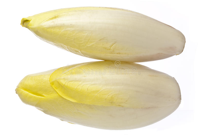 Brussels Chicory Isolated Over White Stock Photo