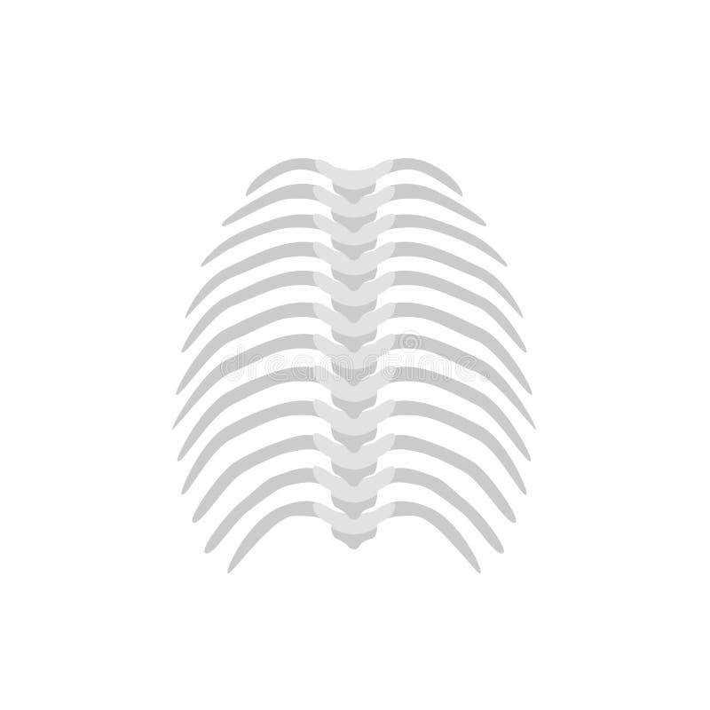 Brust- Rückgrat und gerades Dornkonzept vector die Illustration im flachen Design lokalisiert auf weißem Hintergrund medizinisch lizenzfreie abbildung